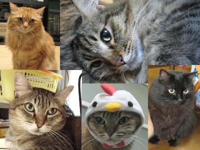 061017猫.jpg