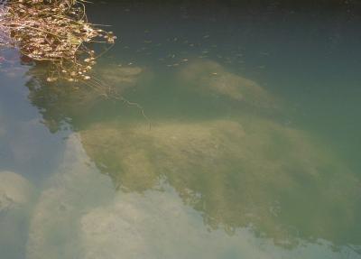 080326南の池.jpg
