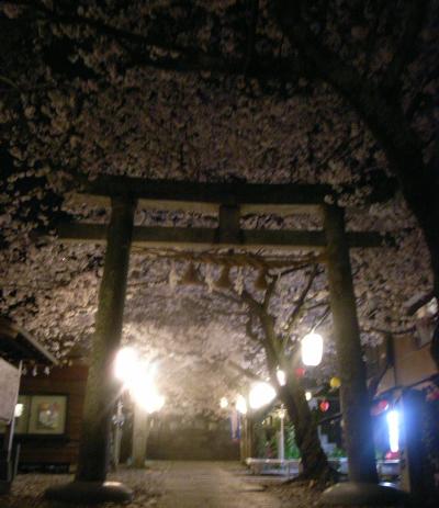 080404桜鳥居.jpg