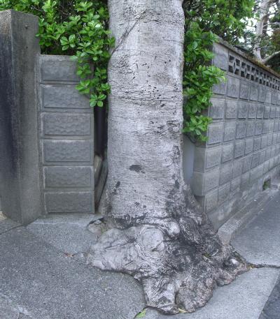 080411樹.jpg