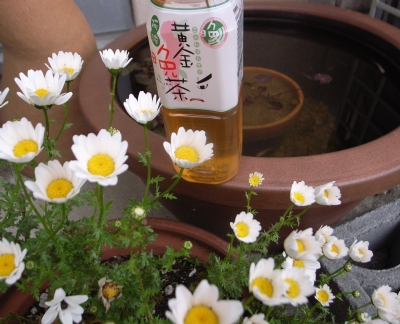 080420阿波晩茶.jpg